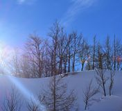 Winter Snowy Scene Trees Sky. Winter snowy scene in Vogel with beech and larch trees and with blue sky for the background. In bright light royalty free stock photography