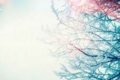 Winter snowy tree branches at sky. Background Stock Image