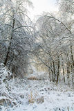 Winter snowy trees landscape Royalty Free Stock Image