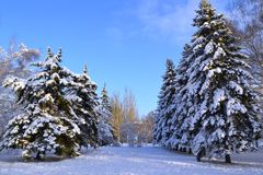 Winter is snowy in Ukraine. At us only such winter, snow. You can go sledging and skiing. Snow covered all the fir trees, and above the blue sky. Beauty royalty free stock photos