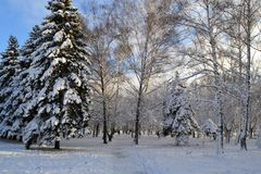 Winter is snowy in Ukraine. At us only such winter, snow. You can go sledging and skiing. Snow covered all the fir trees, and above the blue sky. Beauty stock photography