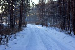 Winter snowy white road in a pine forest Stock Image