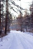 Winter snowy white road in a pine forest Stock Photo