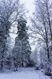 Winter snowy wood landscape Royalty Free Stock Photography