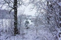 Winter snowy wood landscape Stock Photo