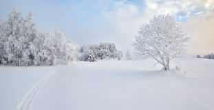 Winter solar field with a lonely tree. Winter field with a lonely tree Royalty Free Stock Images
