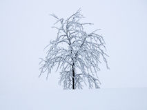 Winter. A solitary, snow-covered tree on a foggy mountaintop Stock Photo