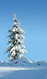 Winter solitude. Single snow covered evergreen against a polarized blue sky Stock Images