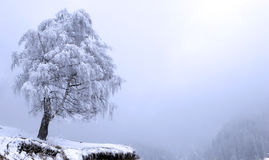 Winter Solitude tree. Mountains fog Stock Images