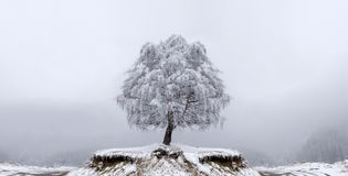Winter Solitude tree Royalty Free Stock Photography