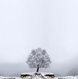 Winter Solitude tree Royalty Free Stock Image