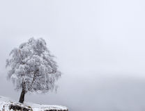 Winter Solitude tree. At the mountains fog Royalty Free Stock Photo