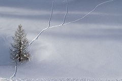 Winter solitude. A tree in the snow Royalty Free Stock Photography