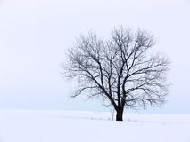 Winter Solitute. Tree on a snowy hill against a cloudy sky royalty free stock photography