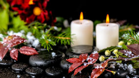 Winter spa ακόμα ζωή των κόκκινων φύλλων με τις πτώσεις, χιόνι, αειθαλές Στοκ Φωτογραφία