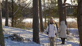 Winter sport for all ages - nordic walking Active people hiking in snowy forest stock video footage