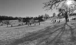 Winter sport in the apple garden royalty free stock photography