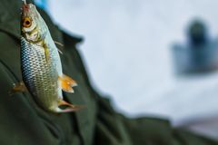 Winter sport ice fishing royalty free stock photo