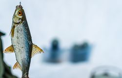 Winter sport ice fishing stock images
