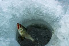 Winter sport ice fishing royalty free stock photos