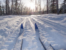 Winter Sport X-country Skis In Sunny Forest Tracks Stock Photo