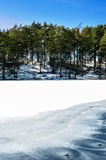 Winter/spring forest with ornament on frozen lake Royalty Free Stock Images
