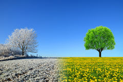 Winter and spring landscape with blue sky. Stock Photos