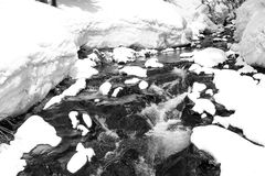 Winter Spring melt. Black and white deep snow melts and runs off in river as new spring vegetation peeks out from beneath snow Royalty Free Stock Images