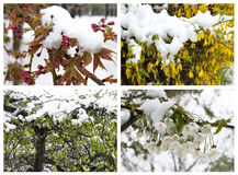 Winter in spring Royalty Free Stock Images