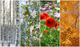Winter, spring, summer, autumn. Four seasons. Nature in winter, spring, summer and autumn. Four seasons Stock Images