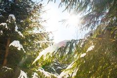 Winter spring tree snow sunrise Stock Photography
