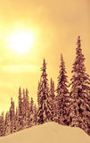 Winter spruce. A cold scene in winter of snow covered spruce trees Stock Photos
