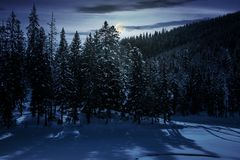 Winter spruce forest at night. In full moon light. beautiful scenery of magic landscape royalty free stock photo