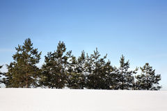 Winter spruce trees on snow hill. Royalty Free Stock Photos