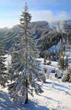 Winter spruces in mountain Stock Image