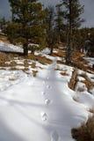 Winter-Spur lizenzfreie stockbilder