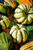 Winter Squash. Freshly harvested winter squash at the farmers' market royalty free stock photo