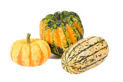 Winter Squash. Colorful Delicata, Carnival and Sweet Dumpling winter squashes Stock Photos