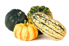 Winter Squash. Acorn, Carnival, Delicata and Sweet Dumpling winter squashes Royalty Free Stock Photos