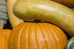 Winter squash Stock Photos