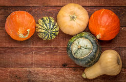 Winter squash background Royalty Free Stock Image