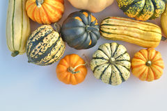 Winter squash collection Royalty Free Stock Photos