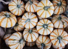 Winter Squash, Cucurbita, Gourd, Vegetable