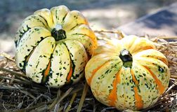 Winter Squash, Cucurbita, Vegetable, Cucumber Gourd And Melon Family Stock Image