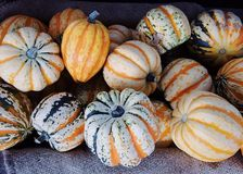 Winter Squash, Cucurbita, Vegetable, Gourd