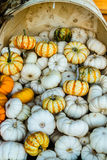 Winter Squash. Of different colors on a bushel Stock Images