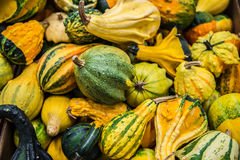 Winter squash kabocha Stock Photos