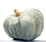 Winter Squash. A large green squash used for Halloween decoration Stock Photos