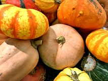 Winter Squash, multiple varieties, September harvest. Farmers market in NW Oklahoma City stock images