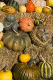 Winter Squash Organic Farm. An assortment of winter squash at an organic farm during harvest royalty free stock image
